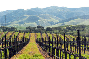 SAn_DIego_WIne_photo