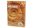 Real Fossil Excavation Kit by Keycraft