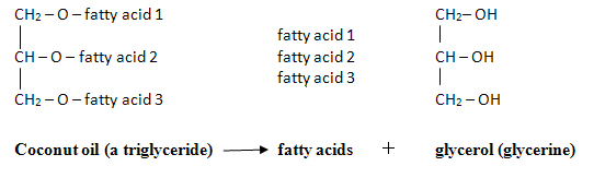 fatty-acids.jpg