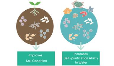 EM1 Effective microorganisms  Australia