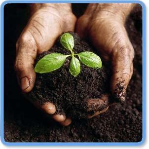 compost-image.jpg