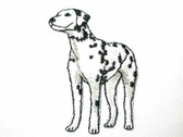 Dalmatian Puppy Embroidered Iron On Applique Patch