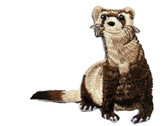 Black Footed Ferret Sitting Iron On Patch 2.75 by 1 Ferrets Treasures