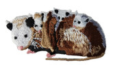 Opossum Possum Family Embroidered Iron On Patch by 1 Ferrets Treasures