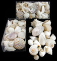 Wedding shells 2 bags