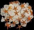 "Tiny Brown Star. 1/4"". Set of 50"