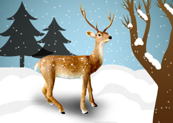 Lena the female reindeer