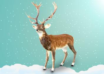 Rudolph the Christmas Reindeer