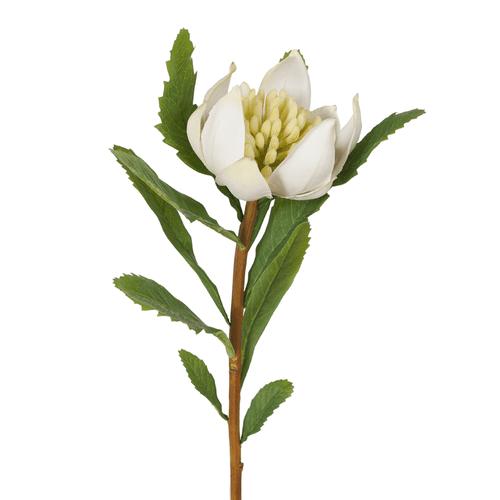 White Waratah Stem - 55cm