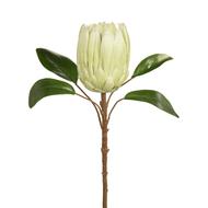 Protea Cream Green