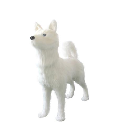 Sandy the white husky