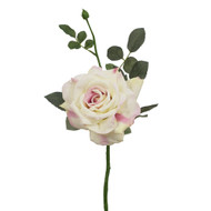 Cream & Pink Garden Diamond Rose