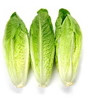 Lettuce - Romaine Hearts (3 Pack)