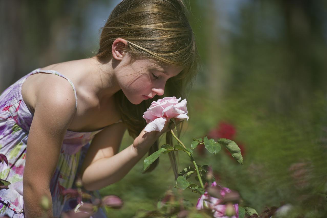 141-fragrant-roses.jpg