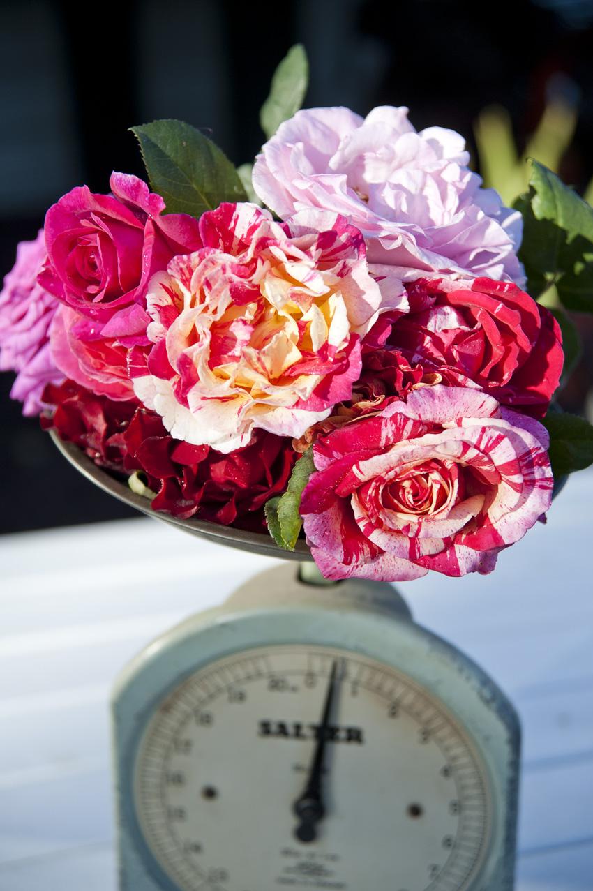 377-delbards-roses.jpg