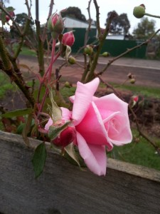 enc-blossomtime.jpg