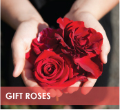 roses-categories-gift-roses-off.jpg