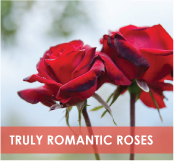 roses-categories-truly-romantic-off.jpg
