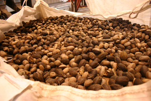 Big Bag of Louisiana Pecans