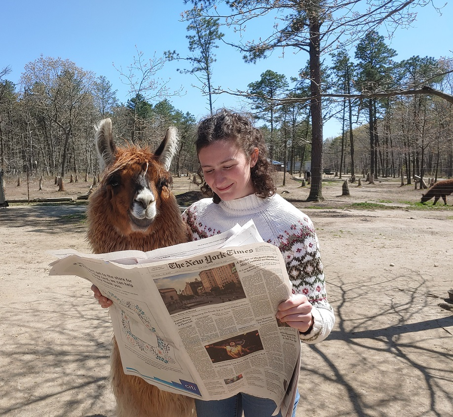 llama-readingn-the-new-york-times4.jpg