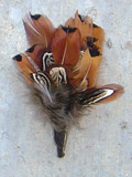 "Pheasant Feather Bunch  4"" (FEA-PHSTBNCH)"