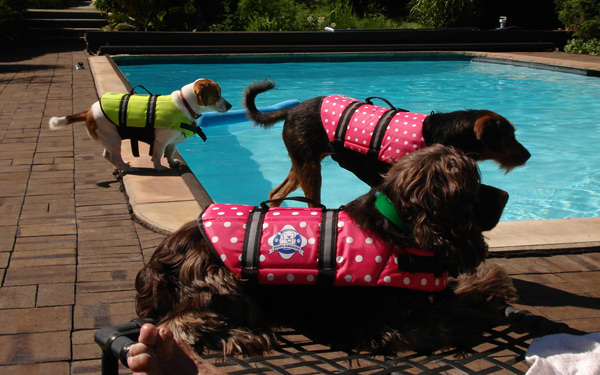 3-muts-by-pool-in-vests.jpg