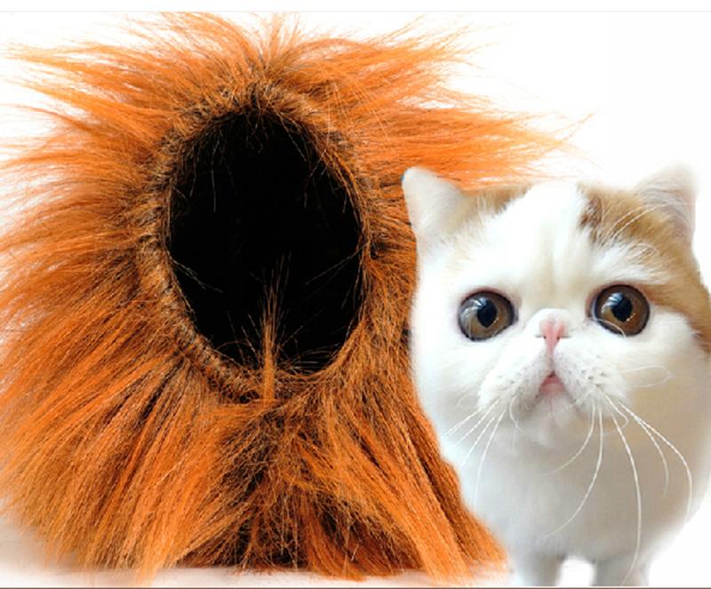 lion-mane-cat.png