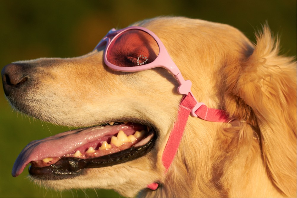 pink-rubber-sunglasses.jpg