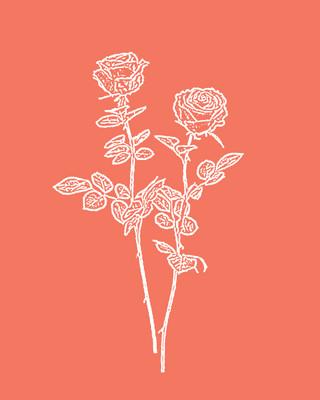 Rose / Coral