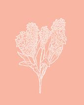 Hyacinth / Peachy