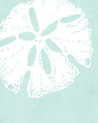 Sand Dollar in Muted Green