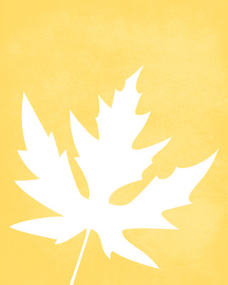 Maple leaf art print