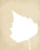 Aspen leaf print