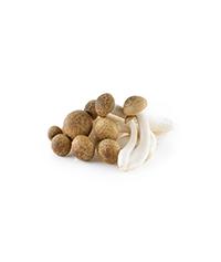 Bunashimeji - Beech Mushroom