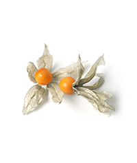 Cape Gooseberries & Golden Berries