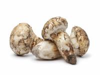 Matsutake Mushroom Chowder