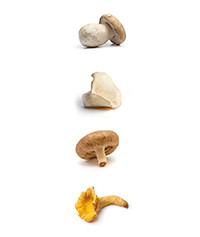 Dried Mushroom Collection Pack