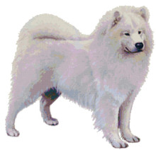 Samoyed Pattern