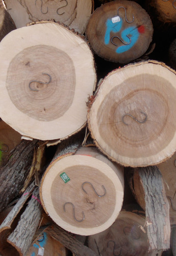"""S-IRONS: Metal shaped """"S"""" Stitches for Logs S-IRONS: Metal shaped """"S"""" Stitches for Logs"""