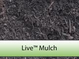 Live Mulch