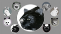 Black Fox Spring Animal by Magic Masters - Trick