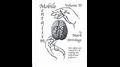Mobile Mentalism Volume II by Mark Strivings - Trick