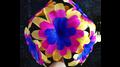 Primrose Flower by Black Magic - Trick