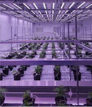 Advanced Fully automated liquid cooled GS1000 installation. GSTS fixtures are nearly 100 times more efficient than a common air cooled lighting system. LED grow lights perform better at lower temperatures. In fact, the cooler they are, the better they perform! GSTS 's liquid cooled lighting system ensures your lights are running cooler, better, longer!