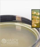 HardyVal™ W28 Malt Extract Agar