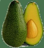Avocado Fuerte - 15 Gal