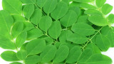 Moringa Tree - 15 Gallon