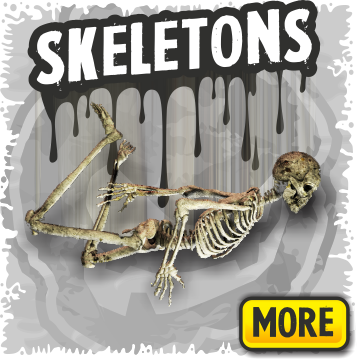 Halloween Skeletons, Skulls & Bones Decorations