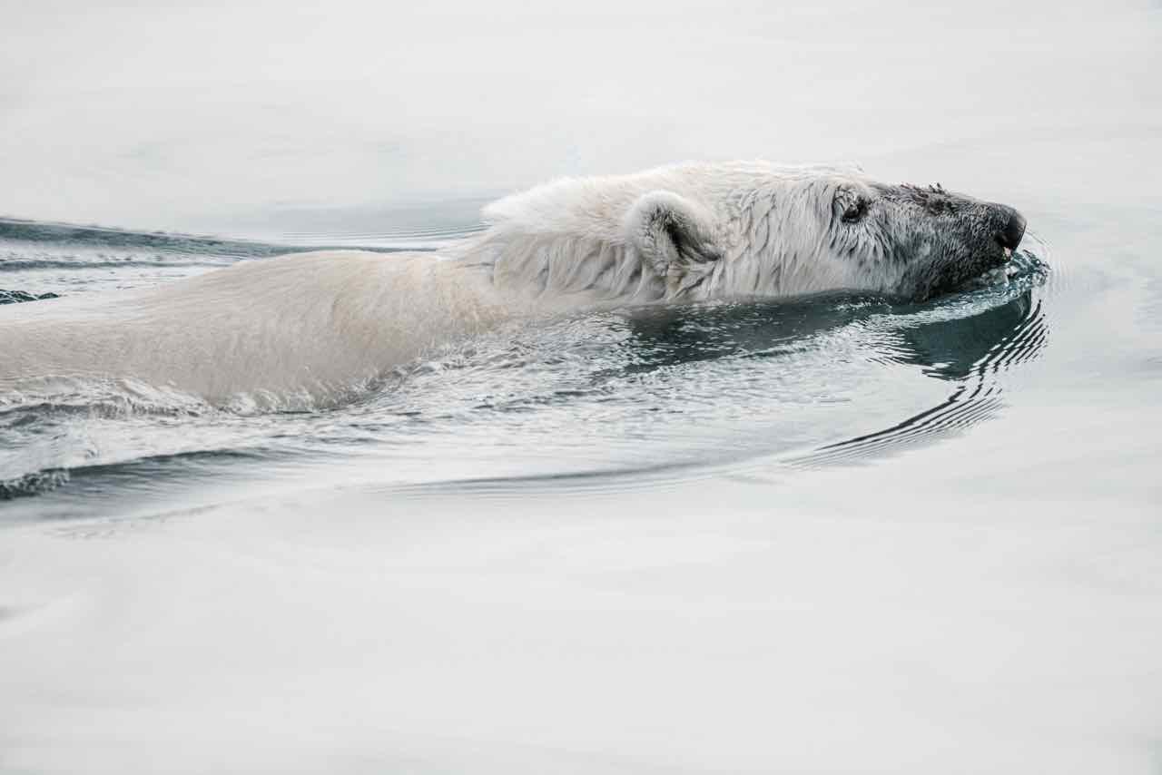 Cold weather training 33shake polar bear