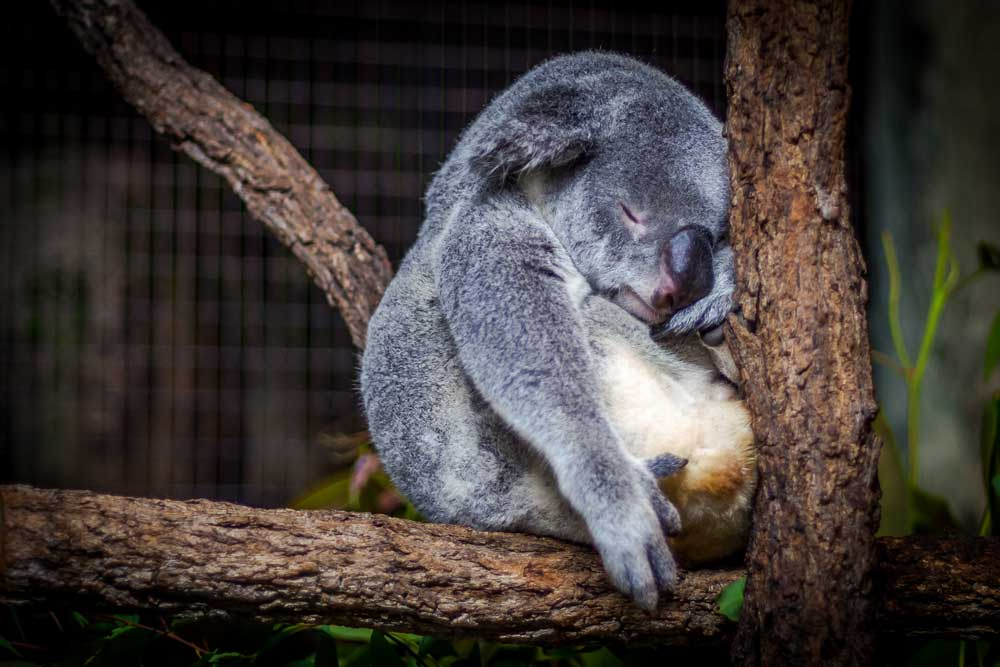 overtraining syndrome - symptoms, prevention and recovery - koala